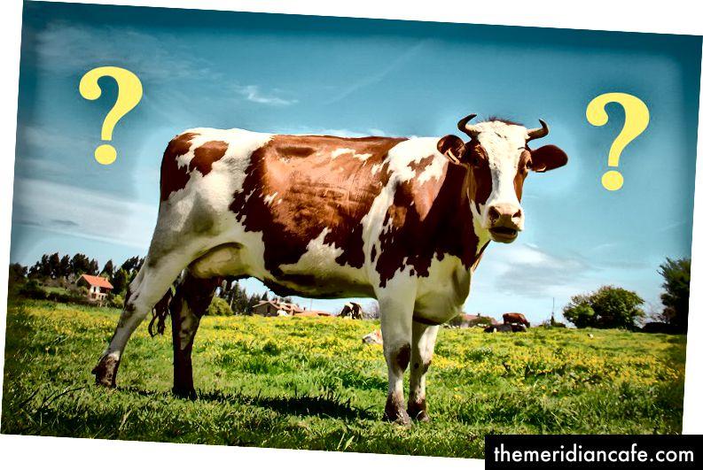 A carne alimentada com capim é melhor em alguns aspectos, mas pior em outros. (Crédito: NASA)