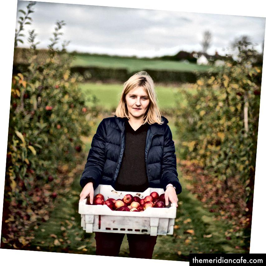 Ilana, l'un des fondateurs de Snact, cueille des pommes qui seraient autrement perdues