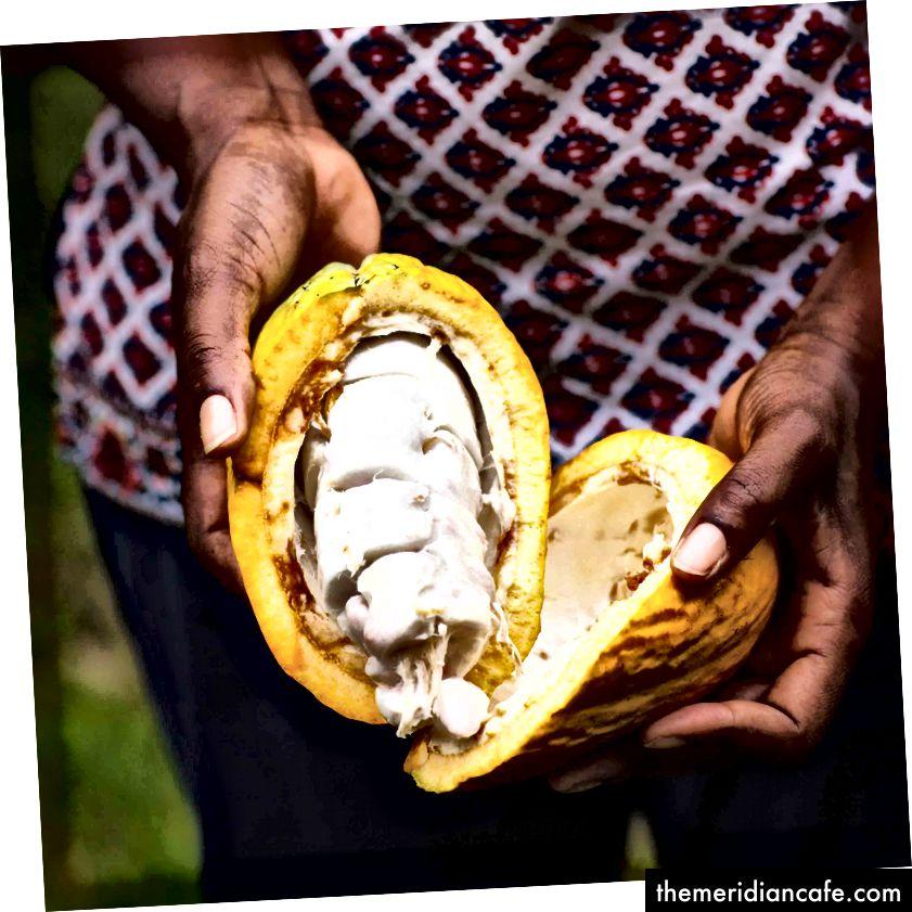Kakao z Ghany (Midunu)
