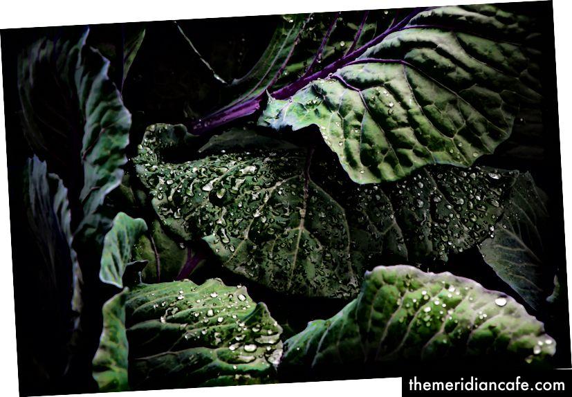 «Feuilles de chou vert foncé avec des tiges pourpres vibrantes recouvertes de gouttelettes d'eau», DRicardo Ange, Unsplash