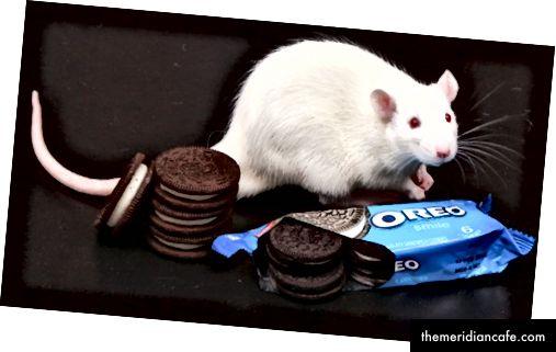 Izvor: https://www.nbcnews.com/video/sugar-high-evidence-oreos-can-be-addictive-54593603954