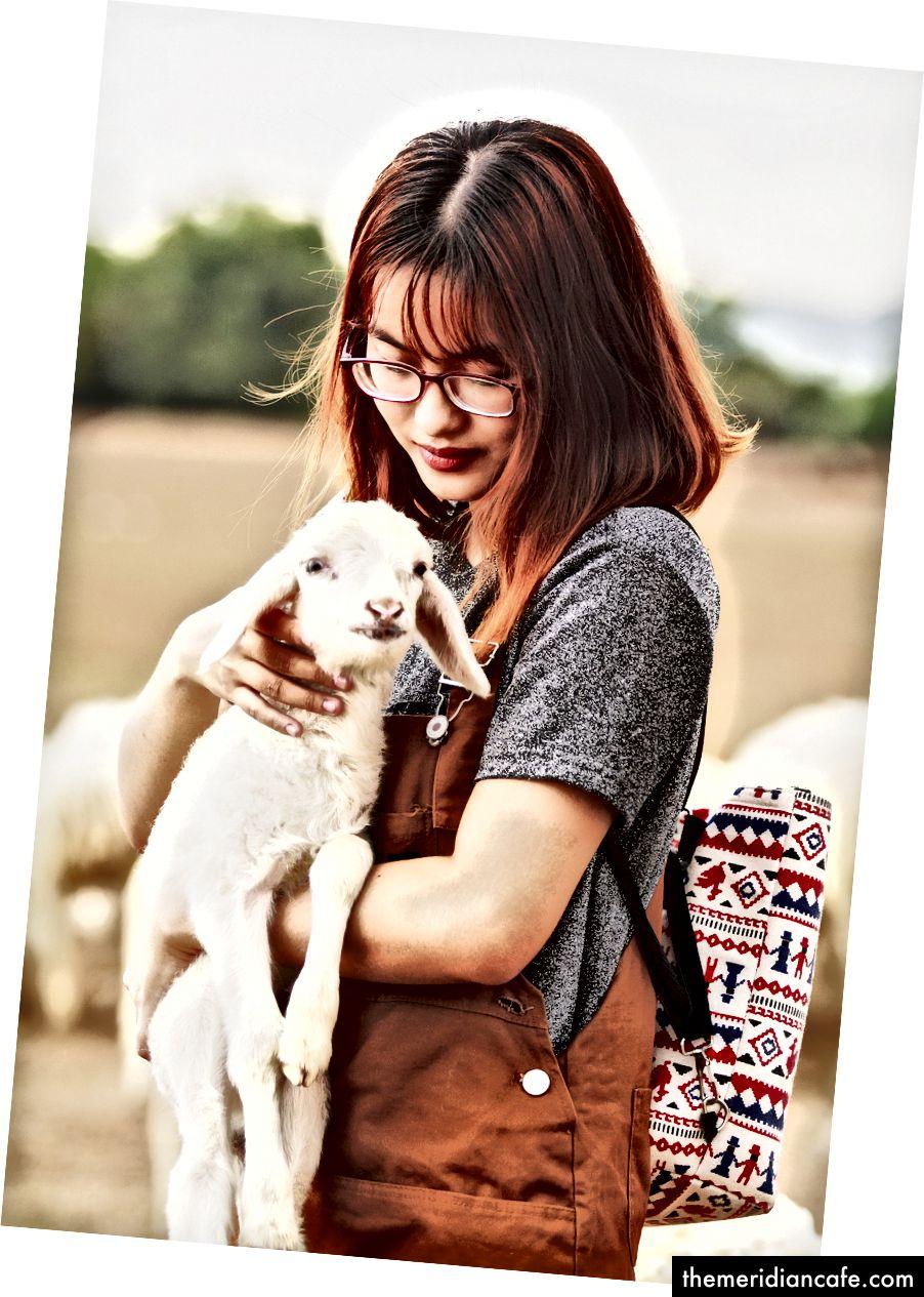 Osoba, ktorá drží roztomilé jahňacie foto od Bin Thiều na Unsplash
