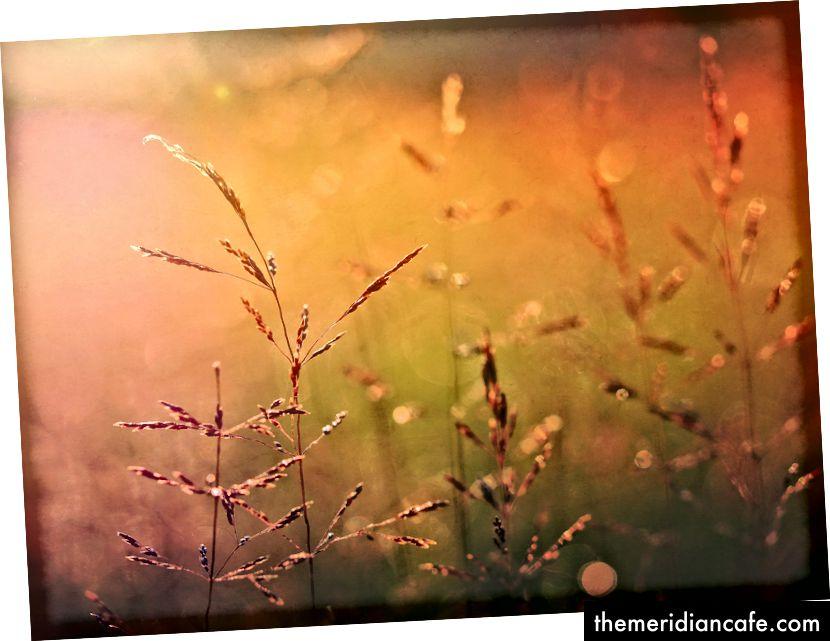 Pyszne ziarna lub rośliny podobne do ziarna. Zdjęcie Aaron Burden na Unsplash