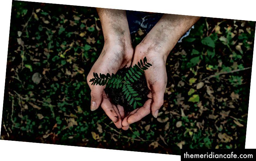 Plant Photo par Noah Buscher sur Unsplash