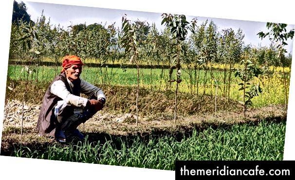 Η Ενίσχυση των Βιώσιμων και Ανθεκτικών Γεωργικών Συστημάτων στην Ανατολική Gangetic Plains, συνεργασία του Αυστραλιανού Κέντρου Διεθνούς Αγροτικής Έρευνας και του Διεθνούς Κέντρου Βελτίωσης του Αραβόσιτου και του Σιτηρού, στοχεύει στη βελτίωση της παραγωγικότητας της μικρής γεωργίας στο Νεπάλ. Φωτογραφία ευγενική προσφορά της IFPRI Νότιας Ασίας, από το Flickr, με άδεια CC BY-NC-ND 2.0
