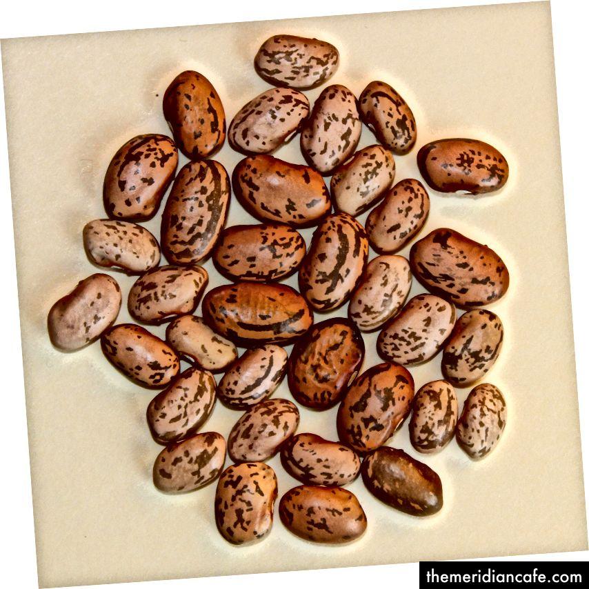 Kacang Kickapoo - foto © nan fischer 2016