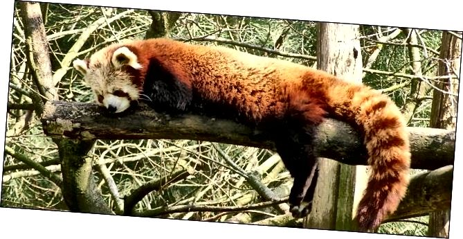 Firefox-κοιμάται